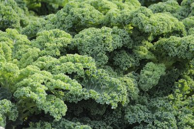 Kale - best foods for sleep