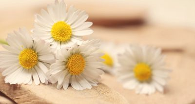 Roman Chamomile - best foods for sleep